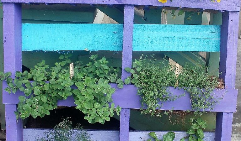 Hawaii, home, garden, landscape, home garden, container, organic, container garden, organic produce, pallet, pallet garden