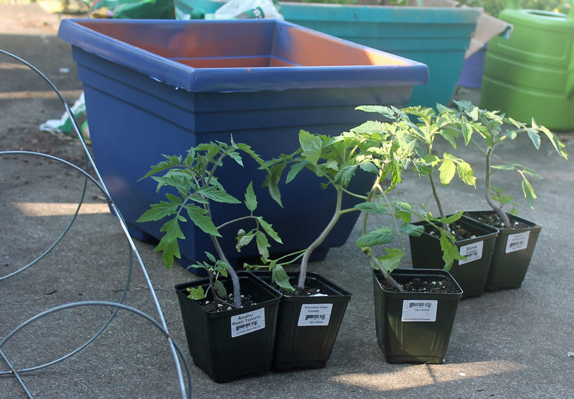 Here's what you'll need for a container garden. A container, starters, trellis (on the left) and potting soil.