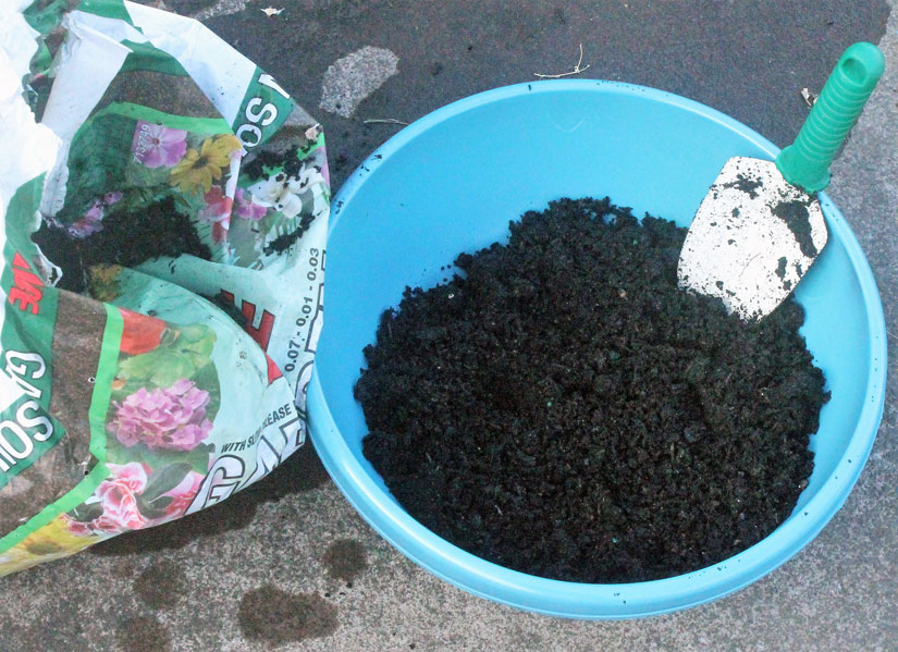 Start with a container with appropriate drainage and a healthy layer of inexpensive potting soil.