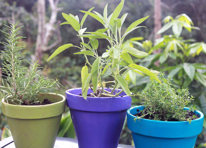 Herbs can be planted in separate and coordinated containers.